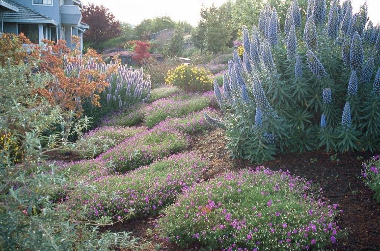 back-garden-pride-of-madera